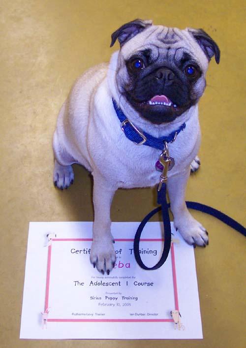Sheba - Puppy School Graduate!