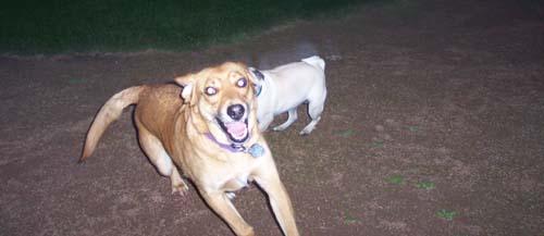 Sheba nearly catching Rusty