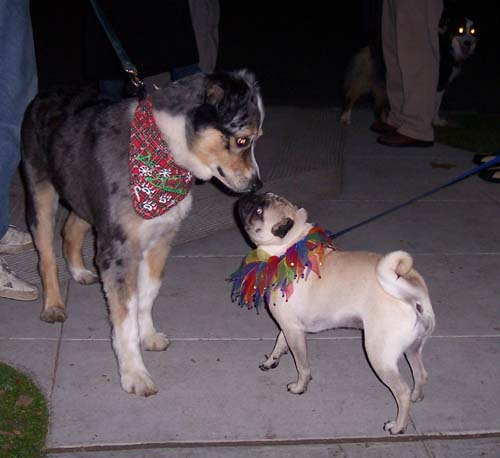 Sheba and friendly Dogs