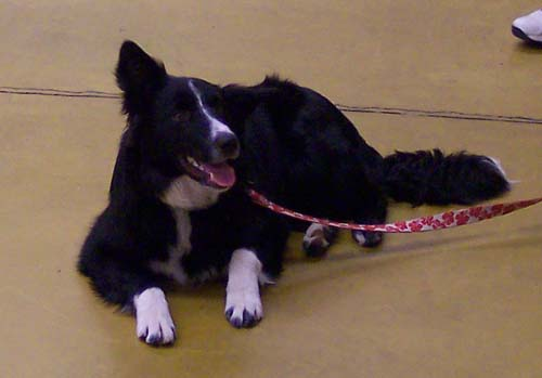 Willis - Puppy School Graduate!