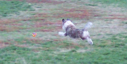 Winston Flying