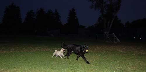 Sheba and Daisy Friday Fun