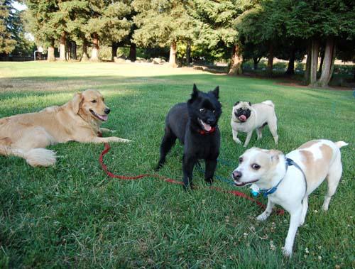 Buster, Daisy, Leo and Sheba