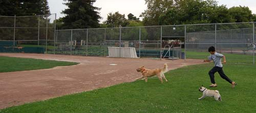 Sheba, Daisy and Friend running the bases