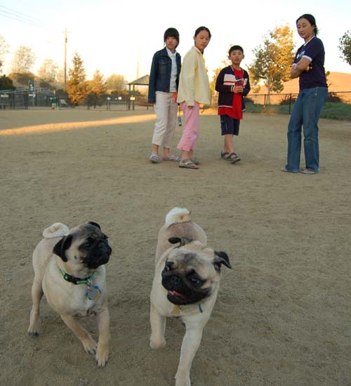 Rap Sunday at the Mountain View Dog Park