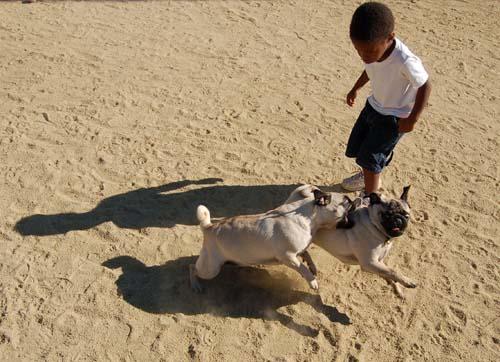 Hug Pug Sunday October 9, 2005