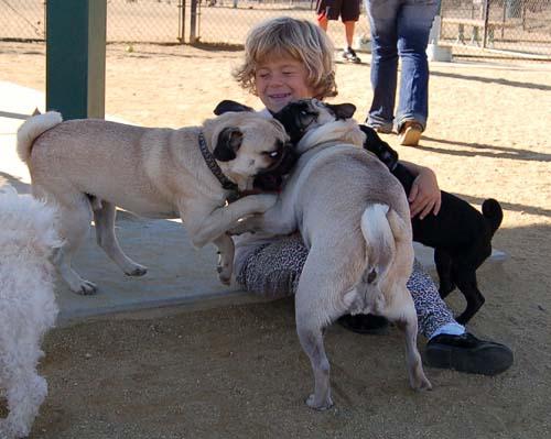 Hug Pug Sunday October 16, 2005
