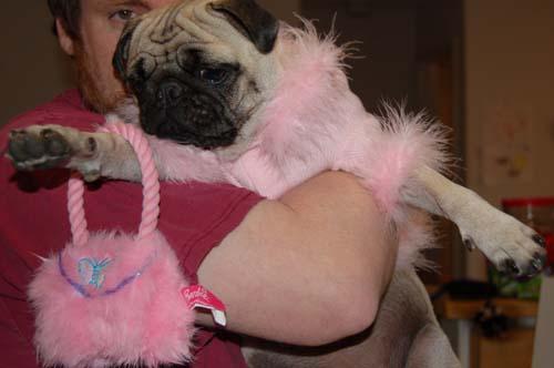 Hug Pug Halloween