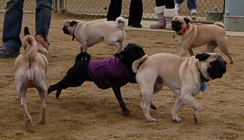 Gwen - Mountain View Dog Fun - January 29, 2006