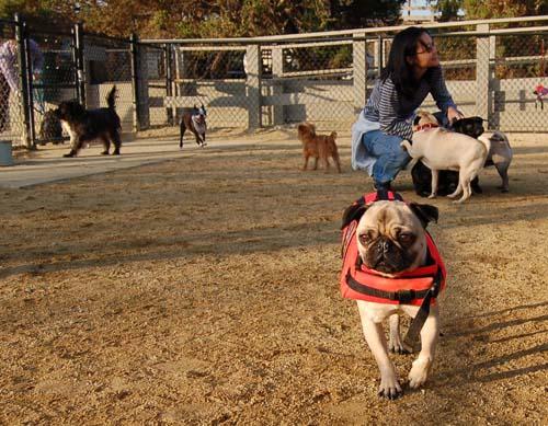Sheba back at the Park