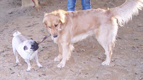 Daisy and Sheba playing fun