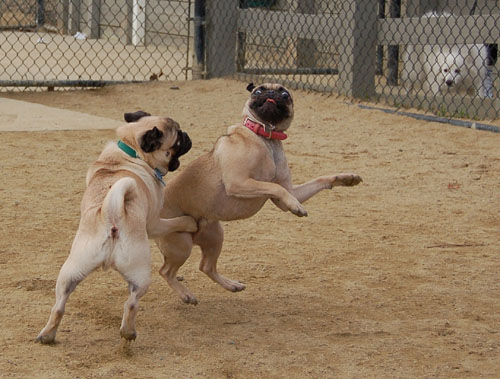 When Roys Attack - Mountain View Dog Fun - January 29, 2006