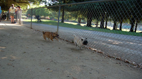 Honey and Sheba Chasing Fun
