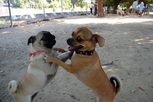 Honey and Sheba Chasing Fun