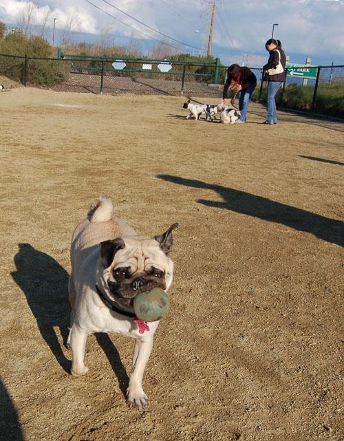 Pugs - February 19, 2006