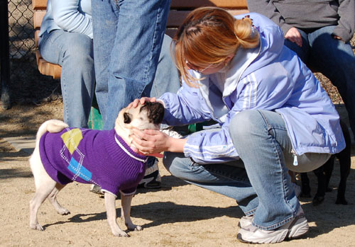 Little Sheba the Hug Pug - February 19, 2006