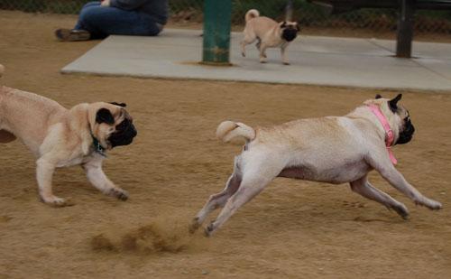 Pug and Hugs - February 26, 2006
