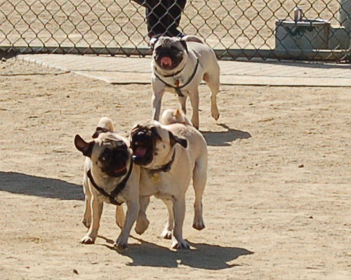 Mountain View Dog Park - April 30, 2006