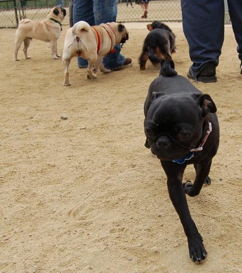 April Dog Park Fun