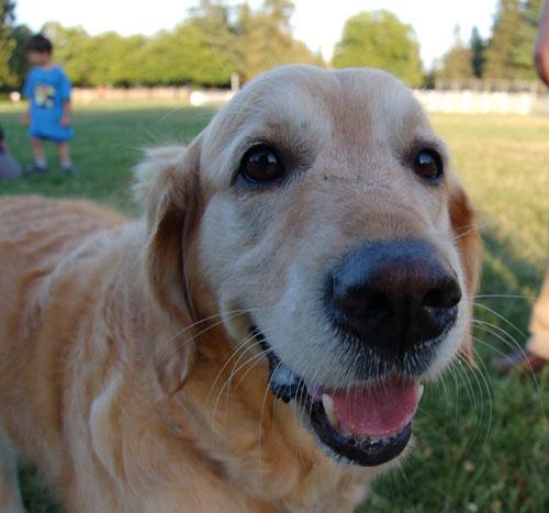 Pug and Hugs - Palo Alto Dog Park Fun with Sheba, Rio and the Gang