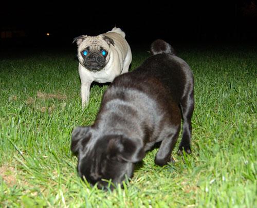 Sheba and Rio at Night