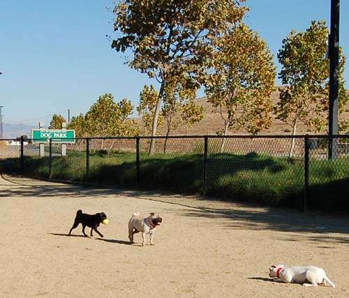 Pugs Pugs Pugs Mountain View Dog Park Fun October 8, 2005