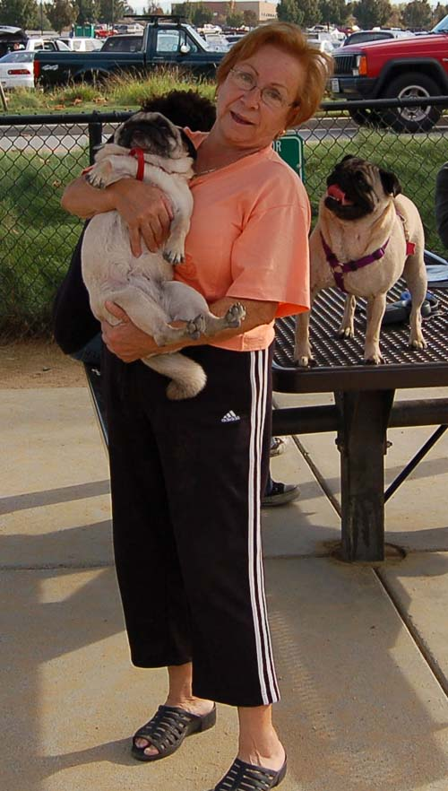 Pugs Pugs Pugs Mountain View Dog Park Fun October 22, 2005