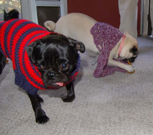 Happy Fun Clothes for Rio and Sheba
