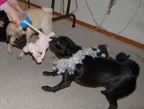 Merry Christmas Pugs