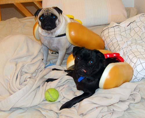 Hot Dog Pugs