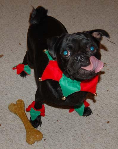 Jingle Pugs