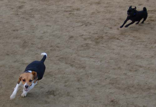 Rio and Sheba Return to the Dog Park