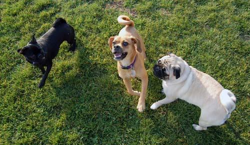 Willow, Rio, Camille and Sheba