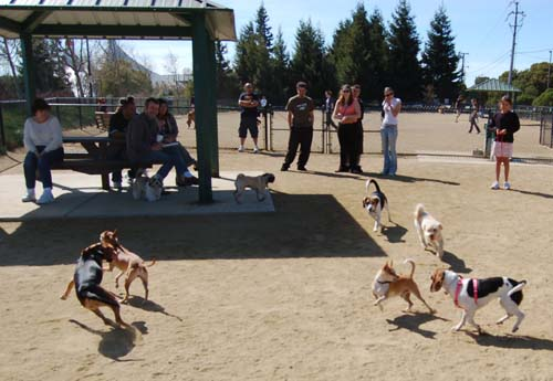 Mountain View Dog Park - March 18, 2007