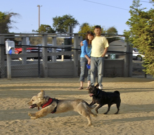 Mountain View Dog Park May 13, 2007