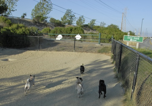 Mountain View Dog Park May 20, 2007