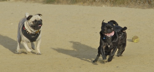 June 3, 2007 Mountain View Dog Park