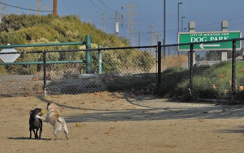 Rio and Sheba return to the Mountain View Dog Park for Fun!