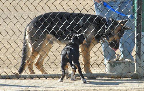 Rio and Sheba at the Mountain View Dog Park - October 21 2007!