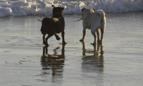 Puppy Play at Ocean Beach