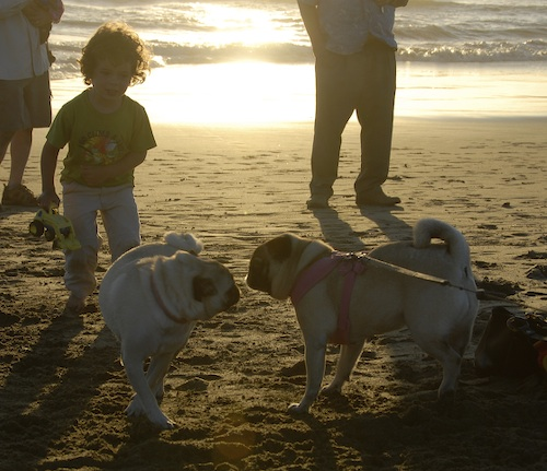 Puppy Play at Ocean Beach